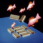 1985_Fish and Chips_001_Thumbnail